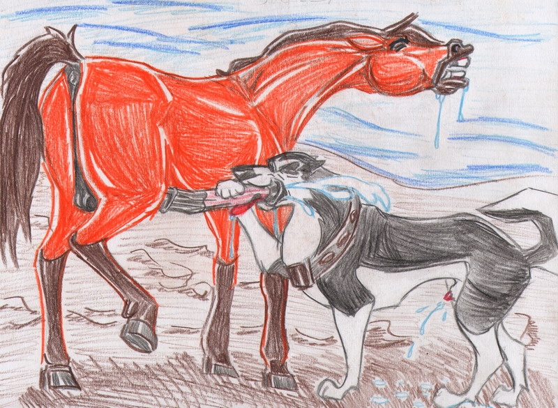 feral stallion couples: delights Is whis male or female